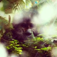Bigfoot Face 10
