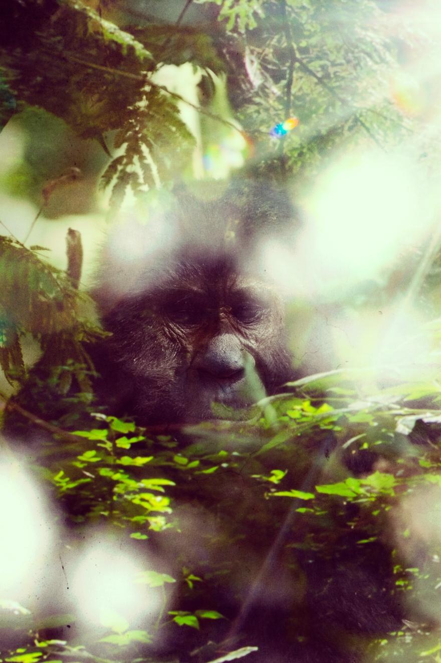 Bigfoot-10.jpg
