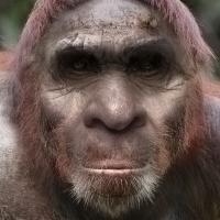 Bigfoot Face 8