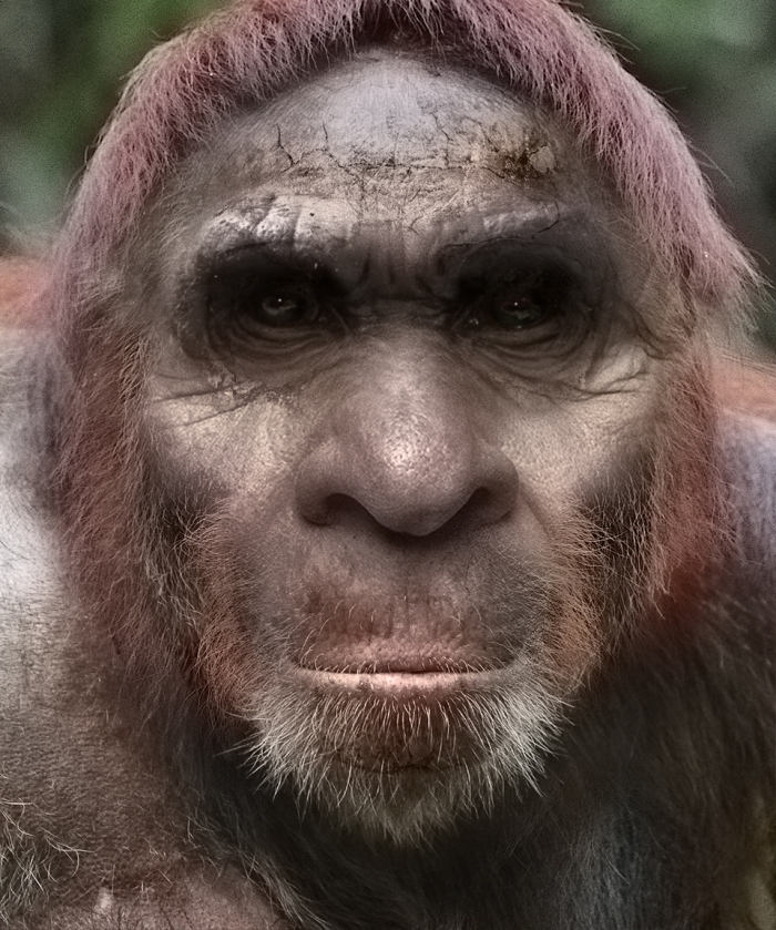 Bigfoot-9