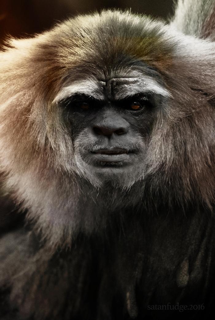 Bigfoot-Face-5.jpg