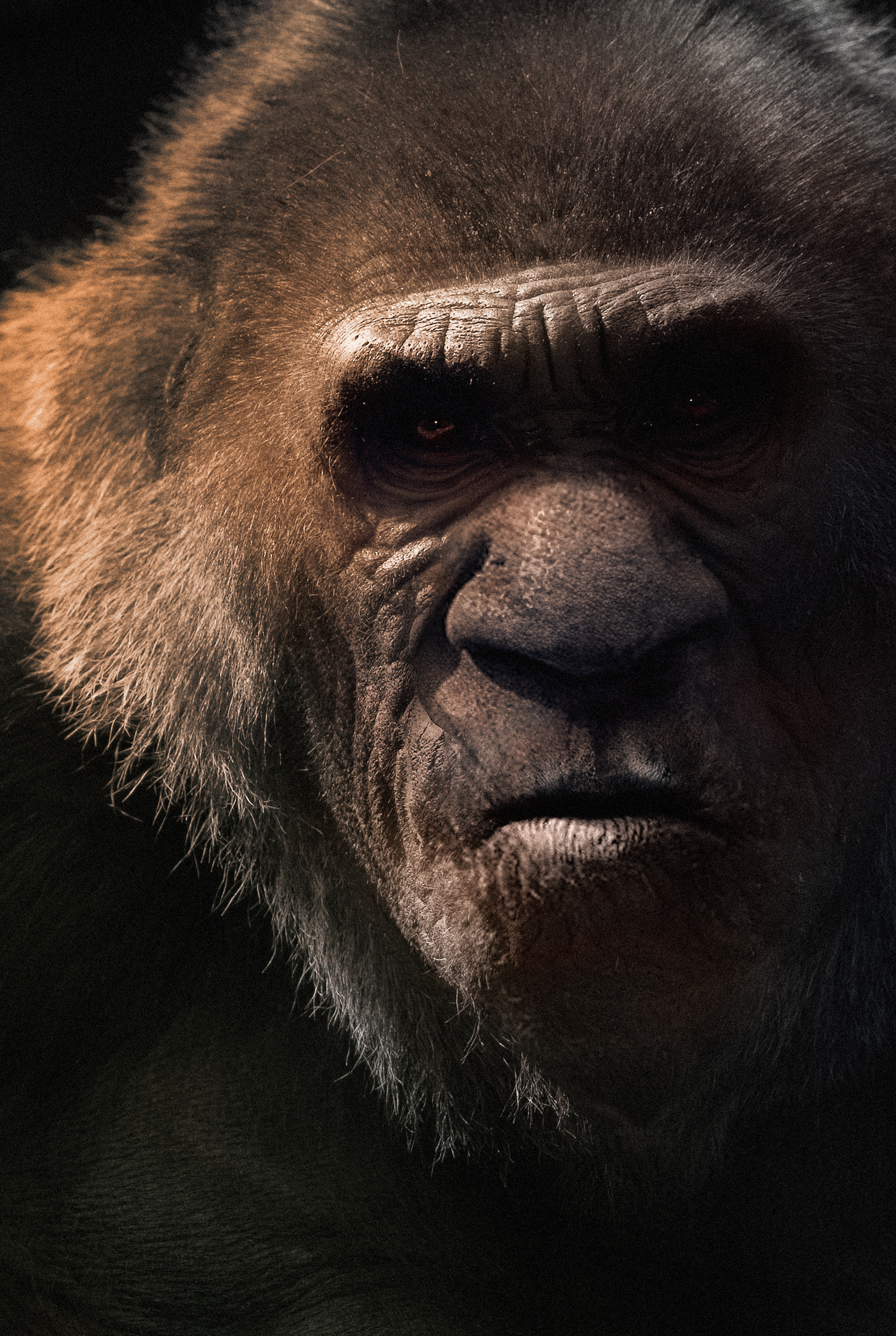 bigfoot facial expression video