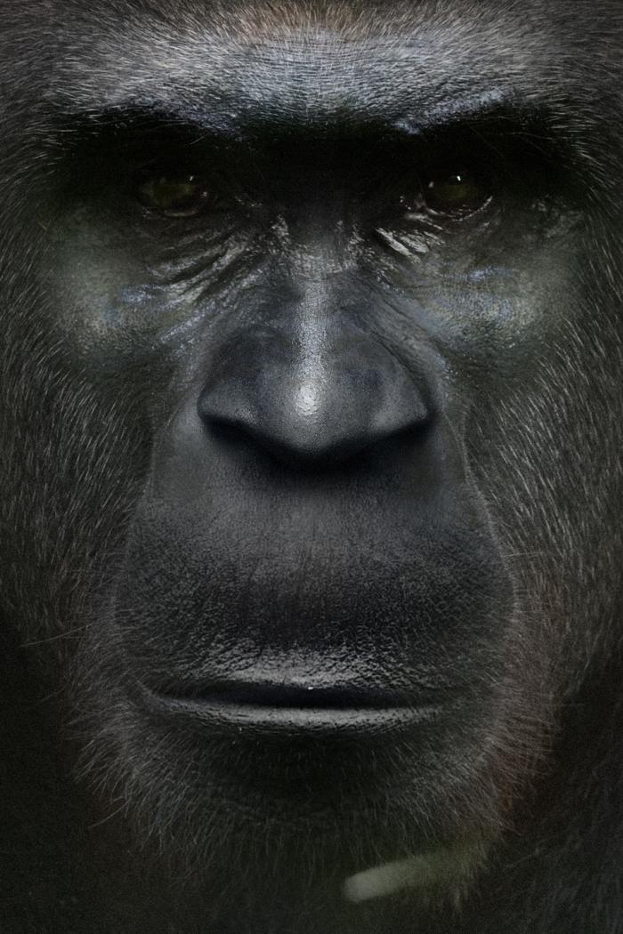 Bigfoot-Face-7