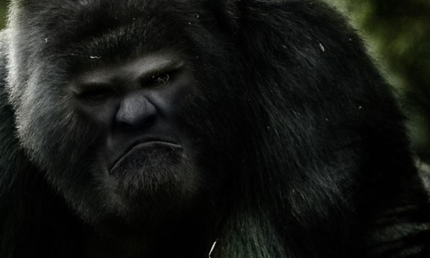 Bigfoot-15.jpg