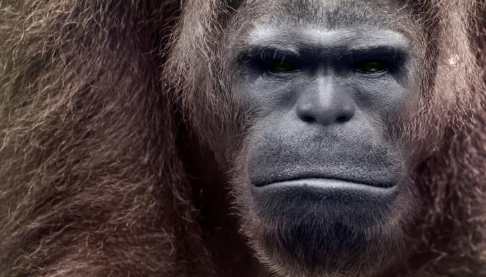 Bigfoot-19.jpg