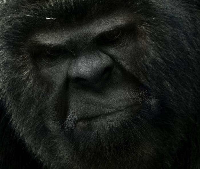 bigfoot-face-14b