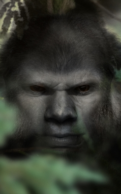The Face of Bigfoot
