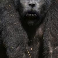 Bigfoot Face 24