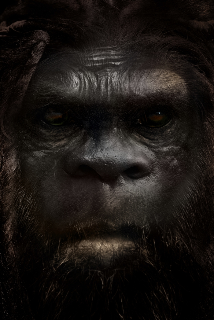 The Sasquatch is a human hybrid species, the mtDNA is human and the nuDNA is unknown.