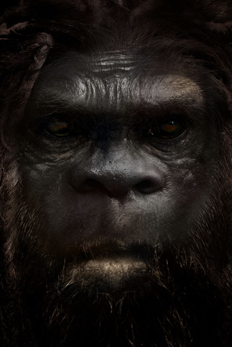 The Sasquatch is possibly a human hybrid species.