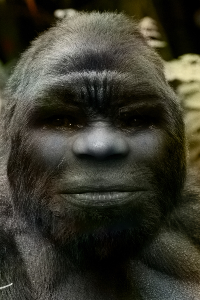 Sasquatch, a novel species of primate, exist as a possible extant hominin and are a direct maternal descendent of modern humans.