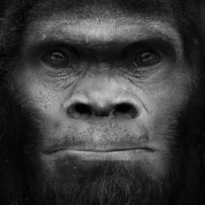 Bigfoot: An uncatalogued species of primate.