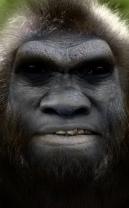 Built on the skull of an australopithecus afarensis