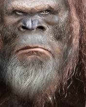 Bigfoot Face