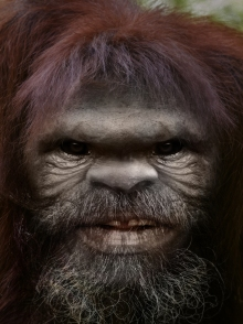 Bigfoot: An uncatalogued species of primate. Possibly a relict hominoid.