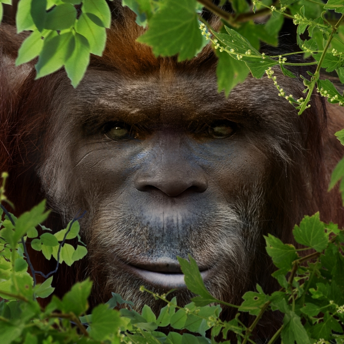 Bigfoot-Face-58