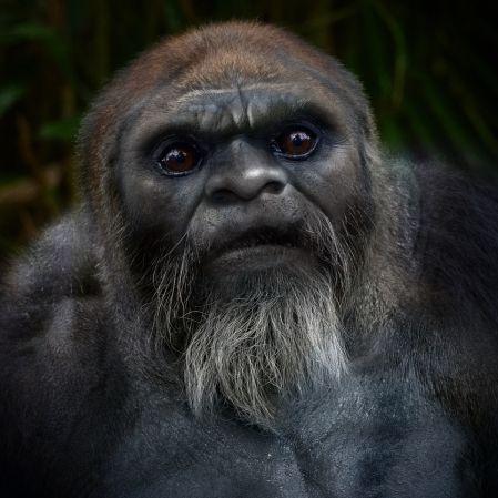Bigfoot Face #60