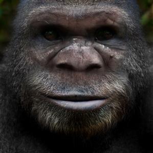 Bigfoot Face 61