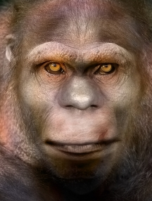 Bigfoot Face 66