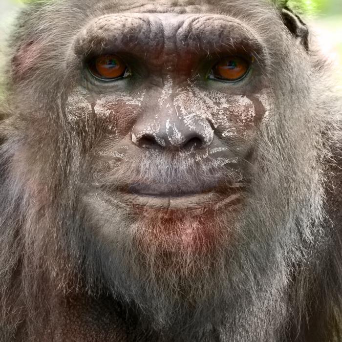 Bigfoot-Face-71