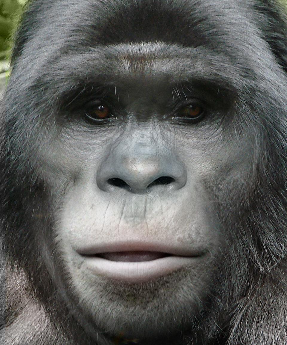 Bigfoot Face 77