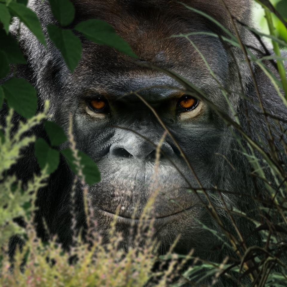 Bigfoot-Face-79