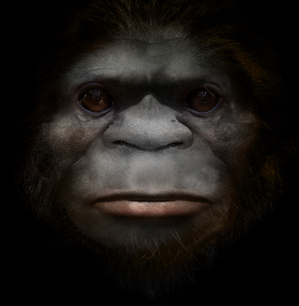 Bigfoot: A novel species of primate. Possibly an extant hominin.
